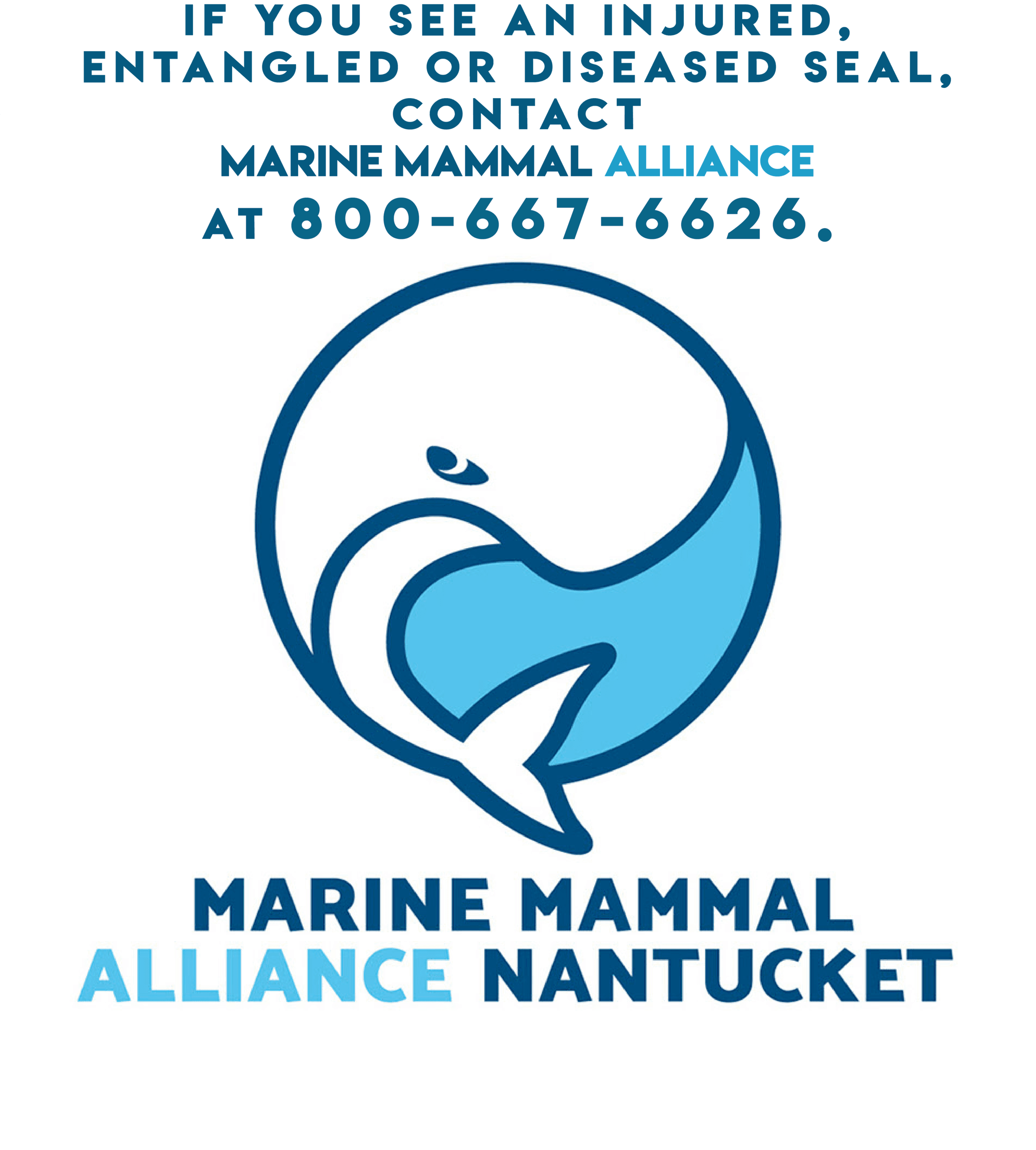 Marine Mammal Alliance Nantucket